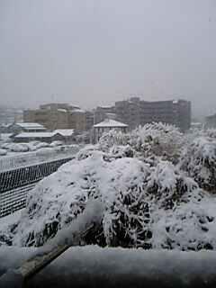 横浜は雪です