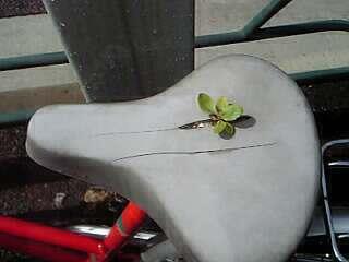 自転車のサドルから出てきたのは