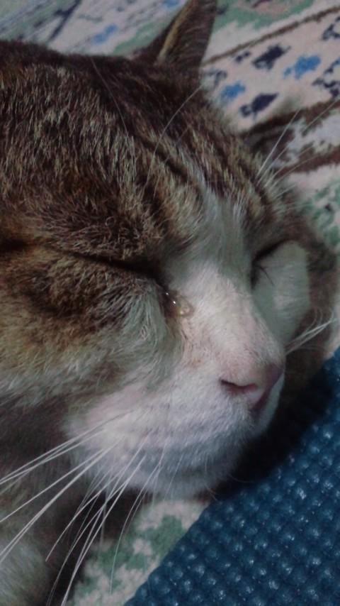 猫の目に涙